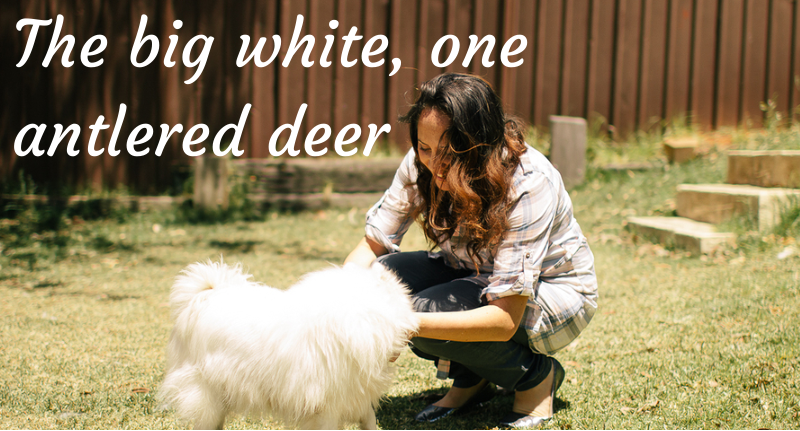 The big white, one antlered deer